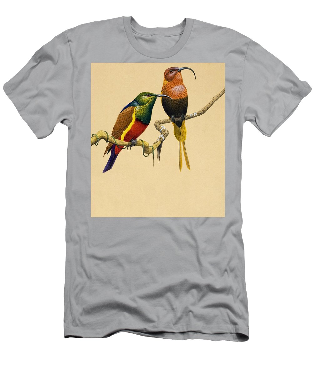 Bird; Tropical; Illustration; Colorful; Curved Beak; Exotic Men's T-Shirt (Athletic Fit) featuring the painting Sun Birds by English School