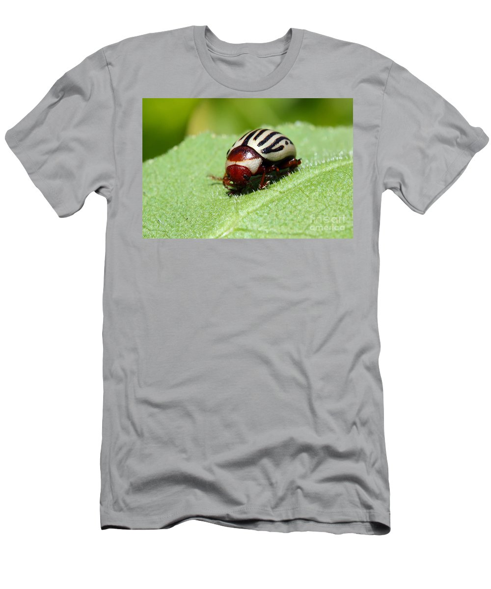 Bug Men's T-Shirt (Athletic Fit) featuring the photograph Sunflower Beetle by Teresa Zieba
