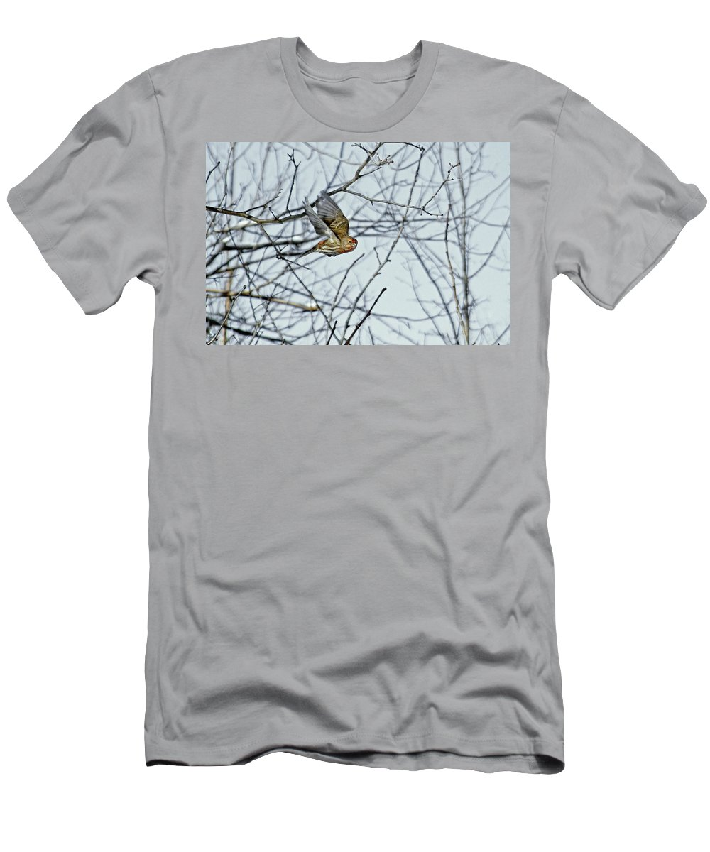 House Finch Men's T-Shirt (Athletic Fit) featuring the photograph The House Finch In-flight by Asbed Iskedjian