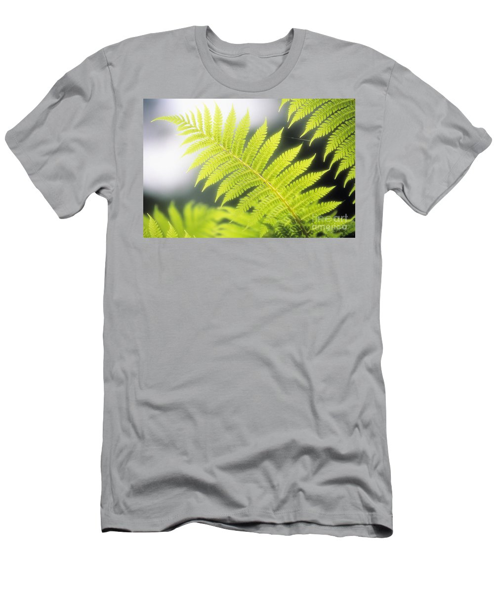 Backlit Men's T-Shirt (Athletic Fit) featuring the photograph Tree Fern by Ron Dahlquist - Printscapes