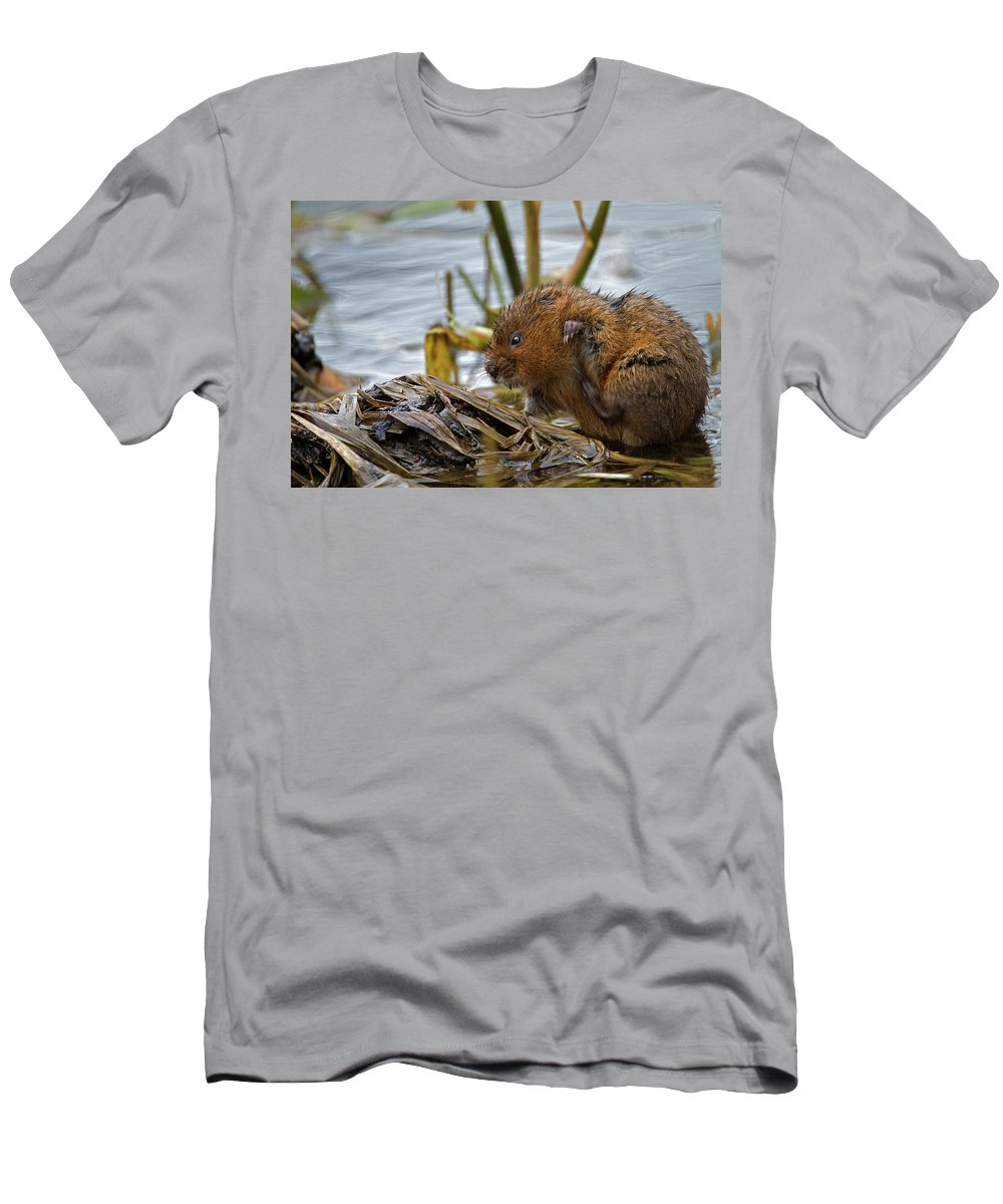 Water Vole Men's T-Shirt (Athletic Fit) featuring the photograph Water Vole Cleaning by Bob Kemp