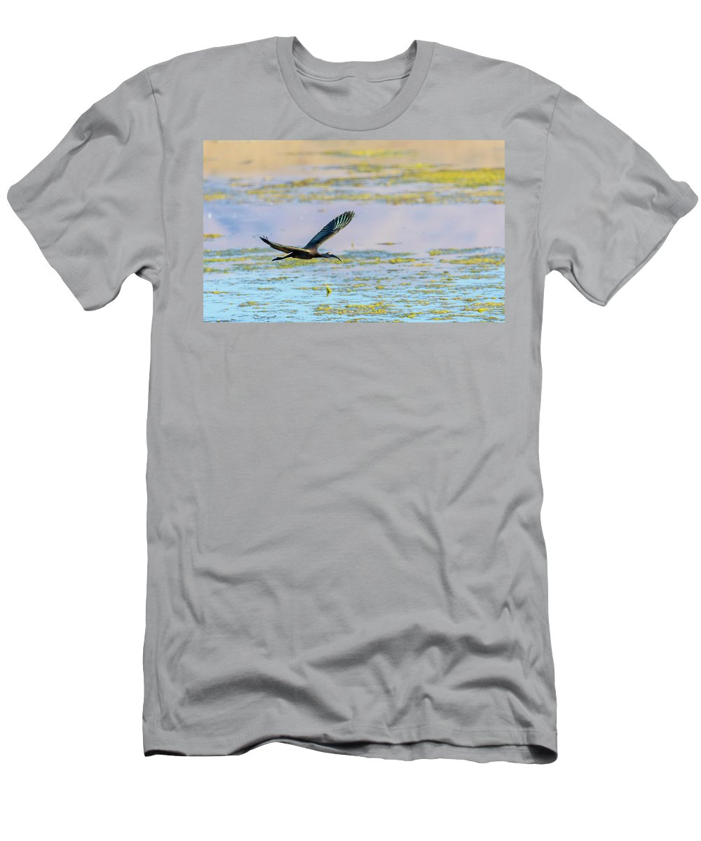 White Faced Ibis Men's T-Shirt (Athletic Fit) featuring the photograph White Face Ibis In Flight 2 by Rick Mosher