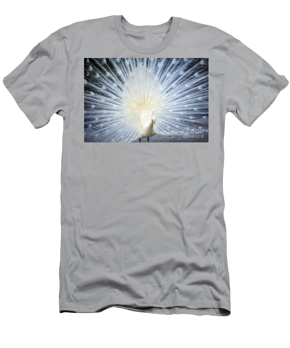 Albino Men's T-Shirt (Athletic Fit) featuring the photograph White Peacock by Rita Ariyoshi - Printscapes
