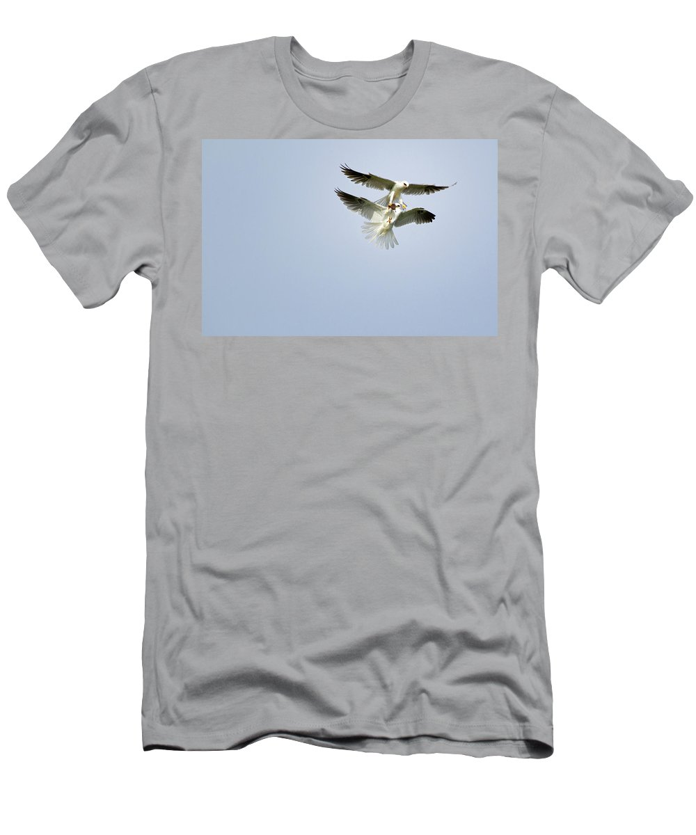 White-tailed Kites Men's T-Shirt (Athletic Fit) featuring the photograph White-tailed Kites Food Exchange by Susan Gary