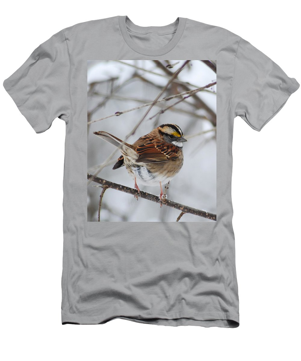 White-throated Sparrow Men's T-Shirt (Athletic Fit) featuring the photograph White Throated Sparrow 2 by Michael Peychich