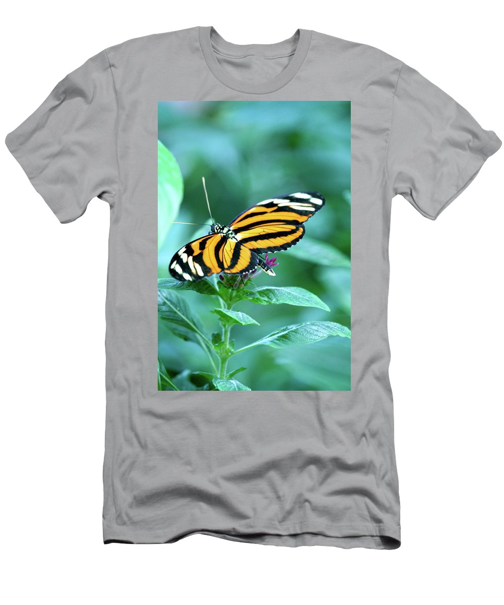 Butterfly Men's T-Shirt (Athletic Fit) featuring the photograph Wing Wonders by Laddie Halupa