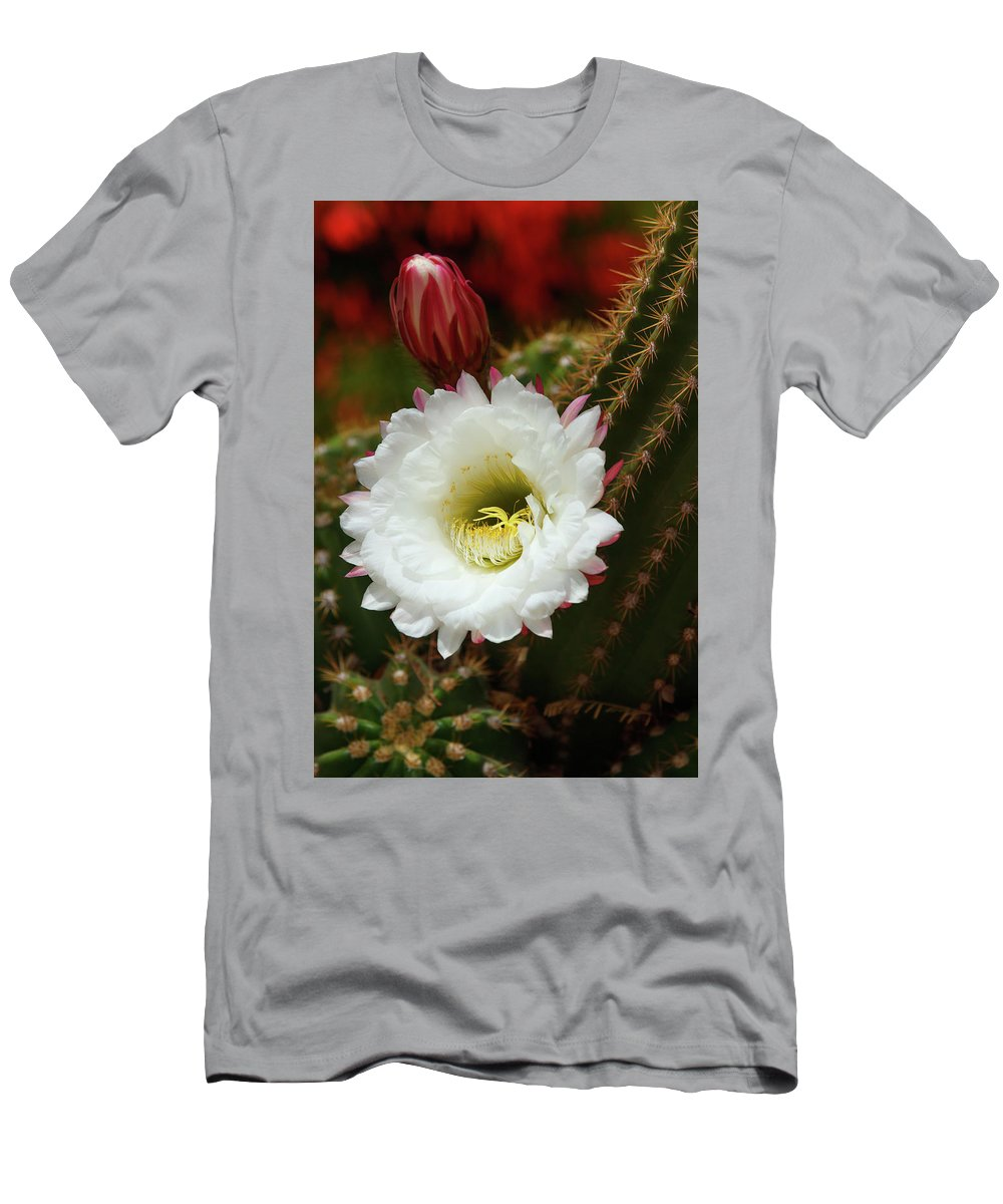 Arizona Men's T-Shirt (Athletic Fit) featuring the photograph Argentine Giant White Flower And Red Bud by Rolf Jacobson