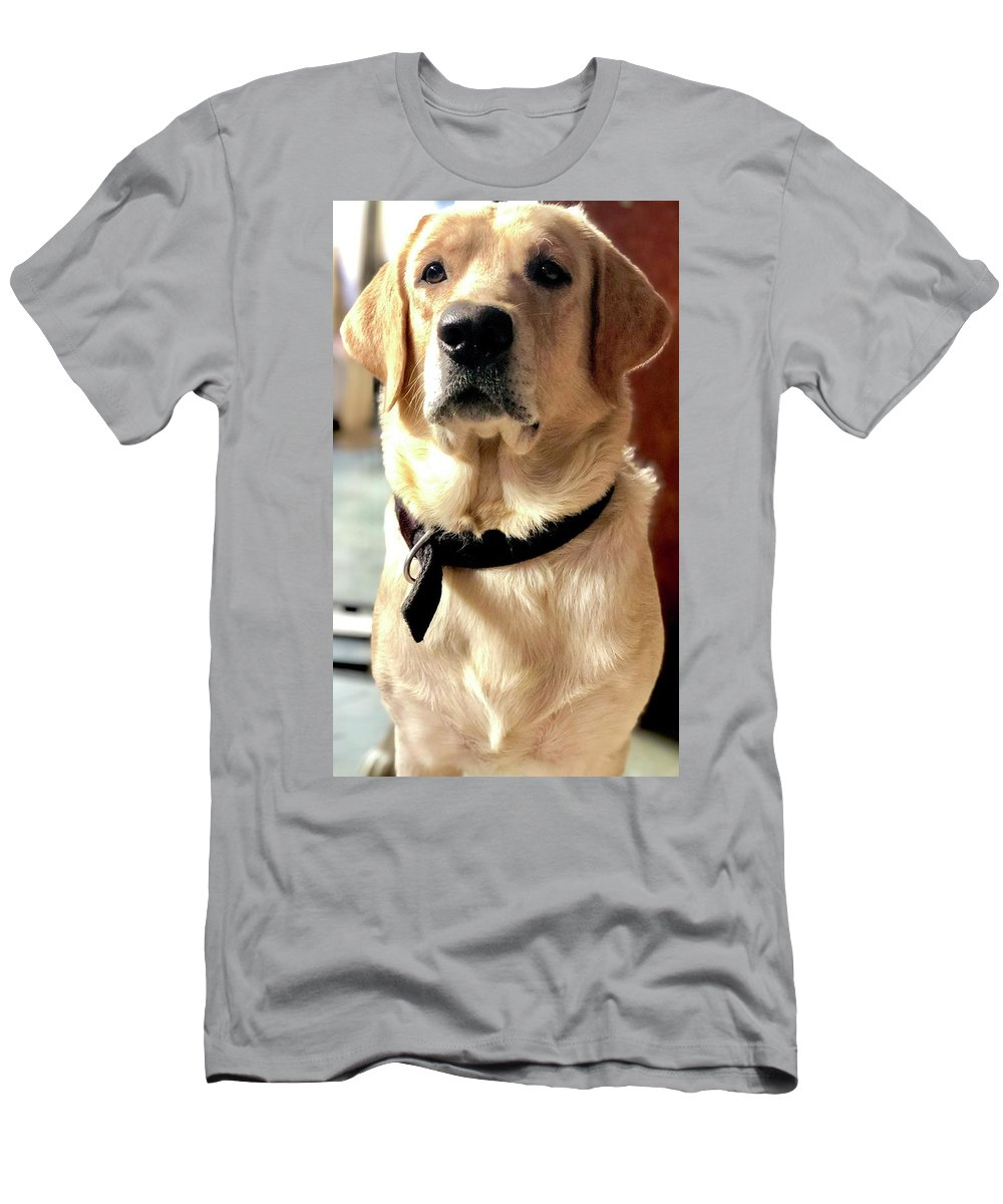 Labrador Dog T-Shirt featuring the photograph Labrador Dog by Arun Jain