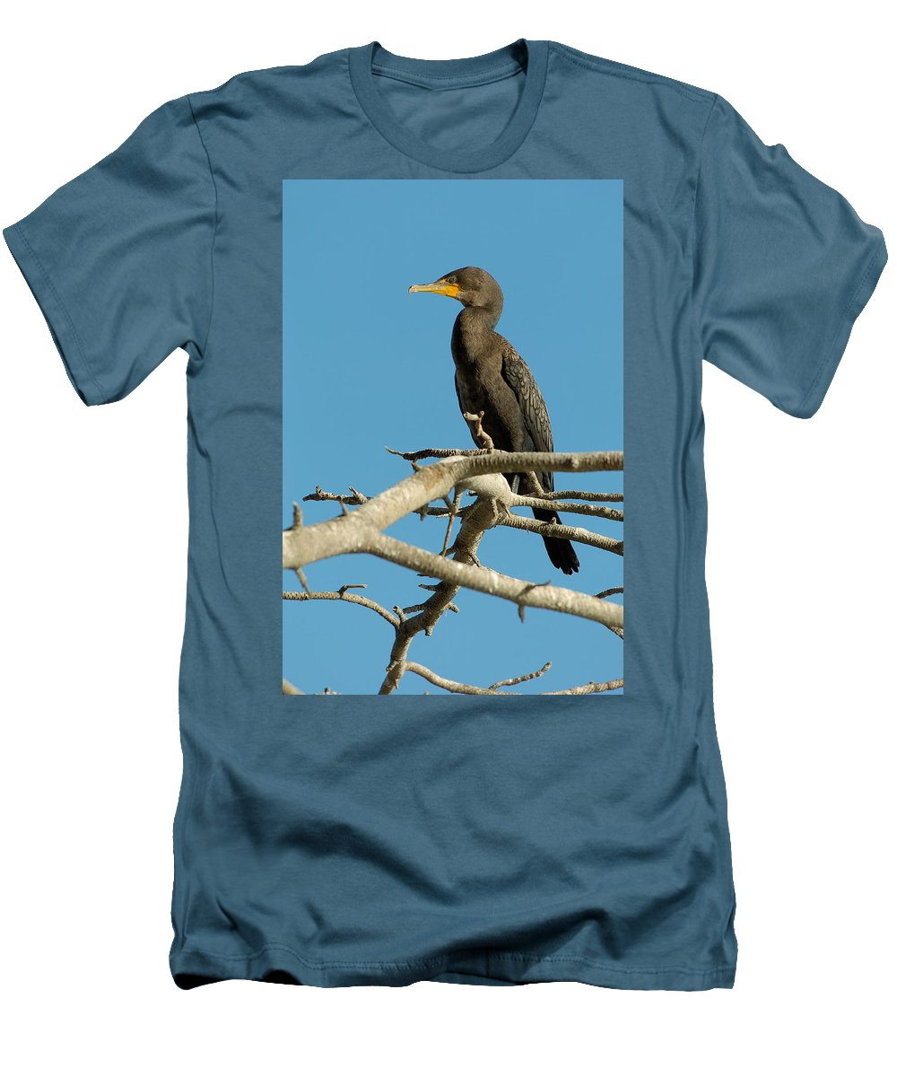 Cormorants Men's T-Shirt (Athletic Fit) featuring the photograph Cormorant by Sebastian Musial