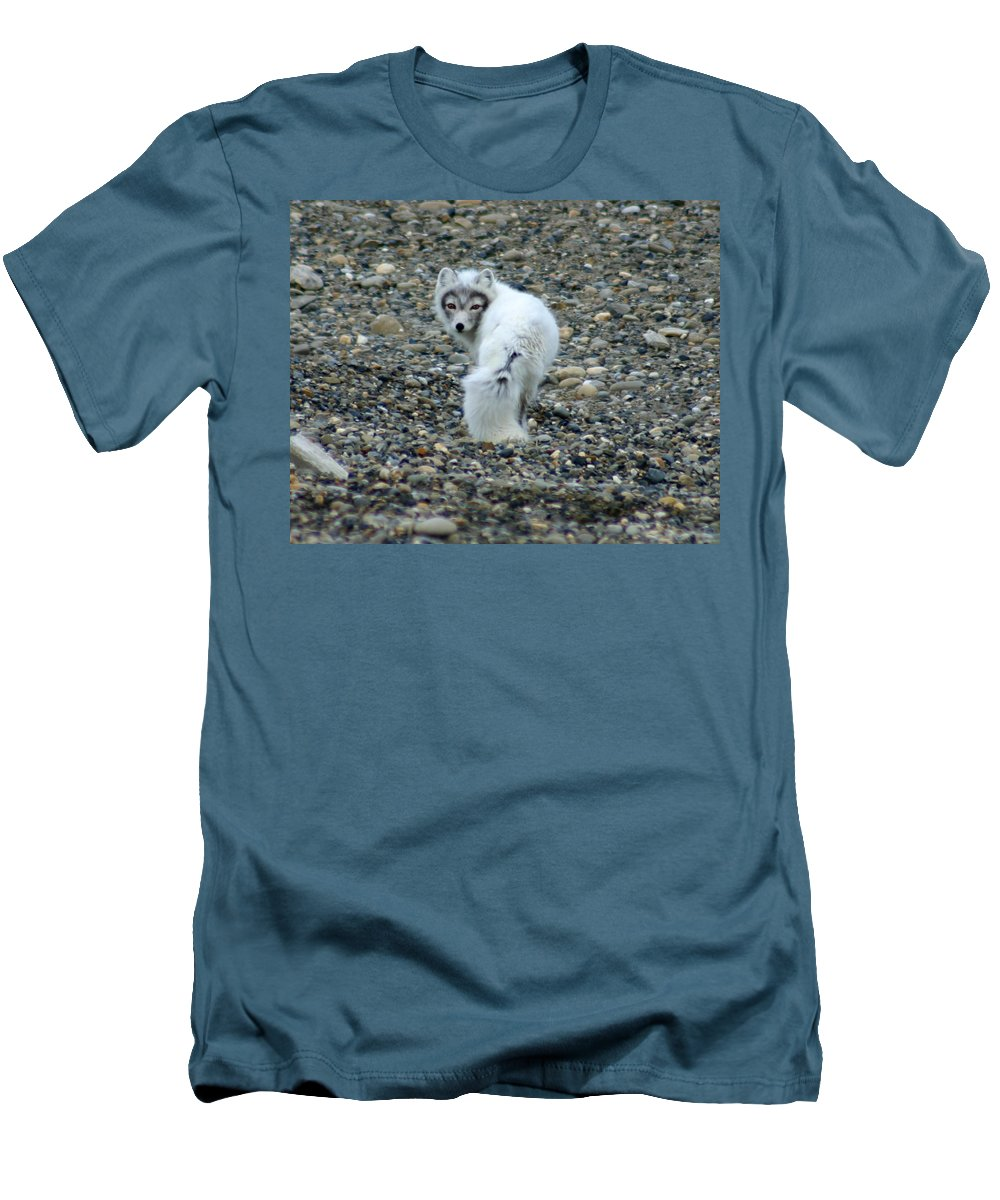 Alaska Men's T-Shirt (Athletic Fit) featuring the photograph Arctic Fox by Anthony Jones