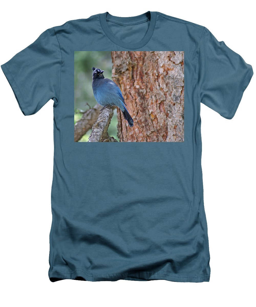 Blue Jay Men's T-Shirt (Athletic Fit) featuring the photograph Blue Jay by Heather Coen