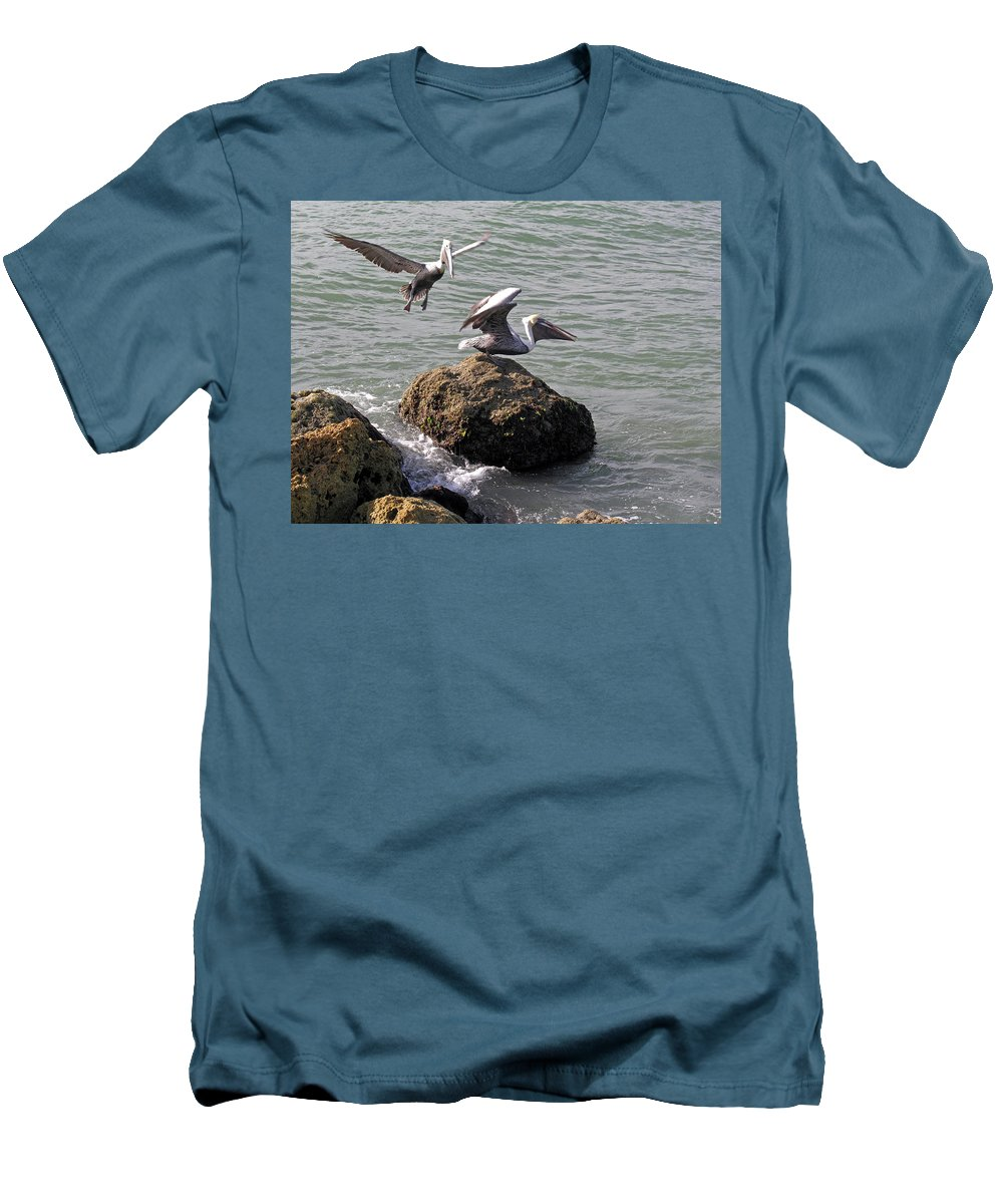Pelican; Rock; Flying; Ocean; Sea; Bird; Florida; Action; Fight; Confrontation; Green; War; Fishing Men's T-Shirt (Athletic Fit) featuring the photograph Brown Pelicans In Florida by Allan Hughes