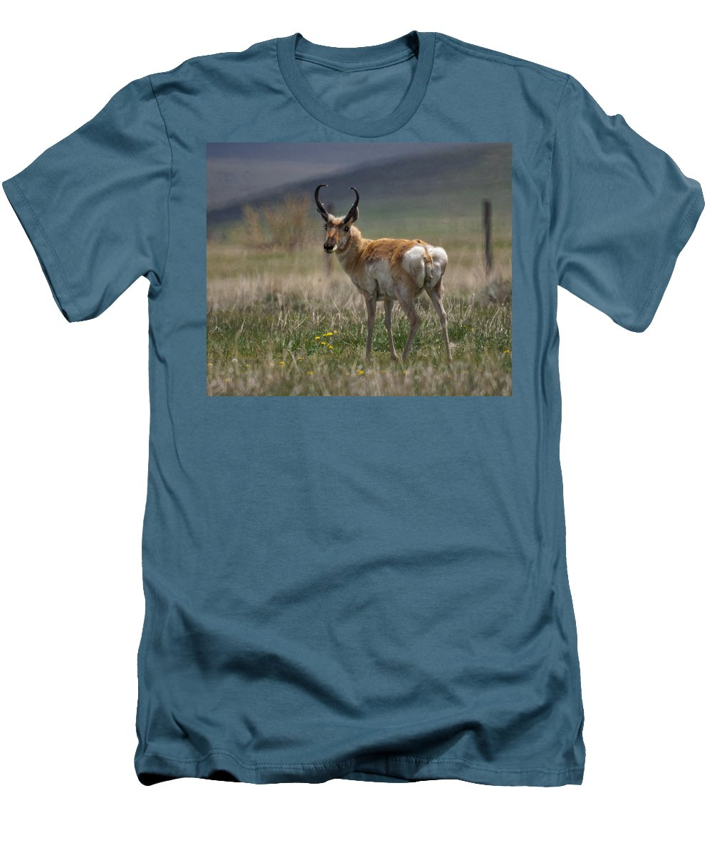 Buck Men's T-Shirt (Athletic Fit) featuring the photograph Buck Antelope by Heather Coen