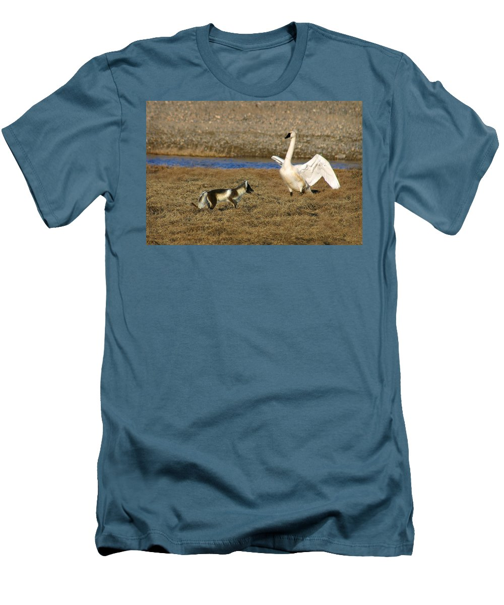 Fox Men's T-Shirt (Athletic Fit) featuring the photograph Fox Vs Swan by Anthony Jones