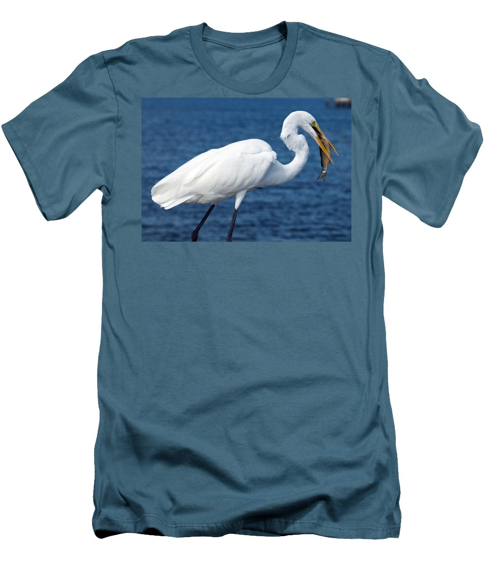 Great; Egret; Ardea; Alba; Eating; Eat; Fish; Redfish; Red; Bird; Seabird; Ocean; Indian; River; Lag Men's T-Shirt (Athletic Fit) featuring the photograph Great Egret In Florida by Allan Hughes
