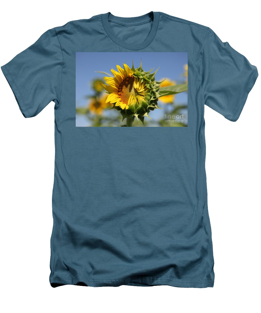 Sunflowers Men's T-Shirt (Athletic Fit) featuring the photograph Hesitant by Amanda Barcon