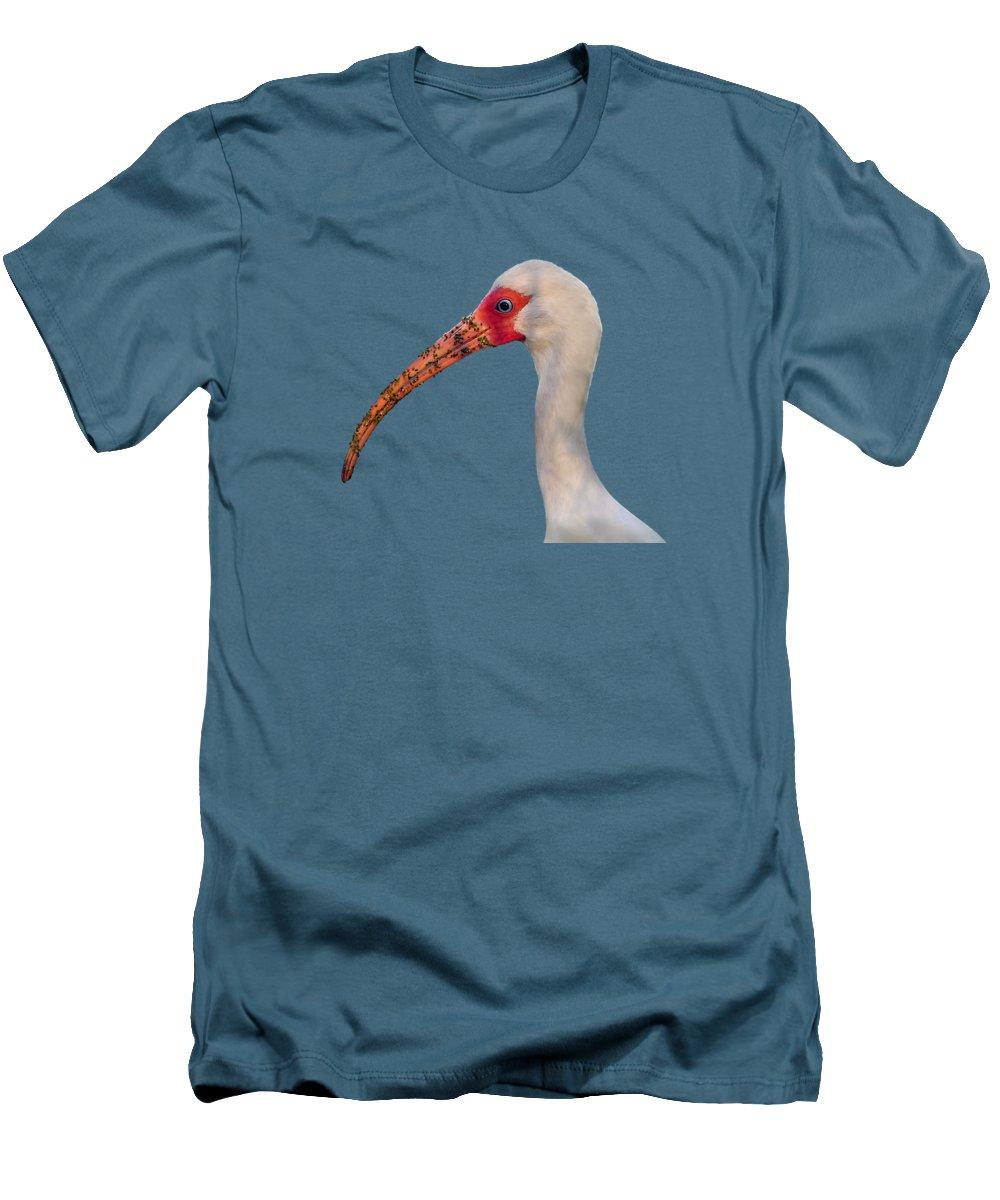 Ibis T-Shirts