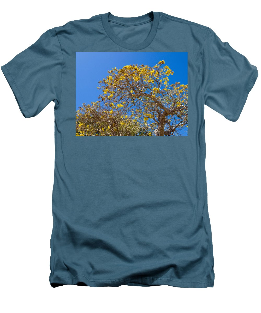 Florida; Tree; Plant; Flower; Flowering; Blossom; Blossoming; Jerusalem; Thorn; Possom; Mexican; Pal Men's T-Shirt (Athletic Fit) featuring the photograph Jerusalem Thorn Tree by Allan Hughes
