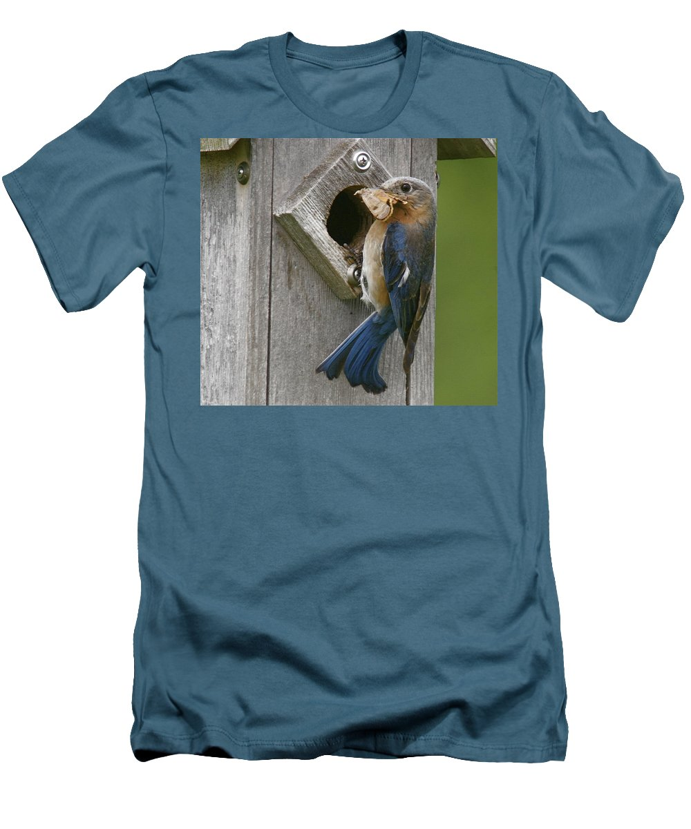 Bird Men's T-Shirt (Athletic Fit) featuring the photograph Lunch Time by Robert Pearson