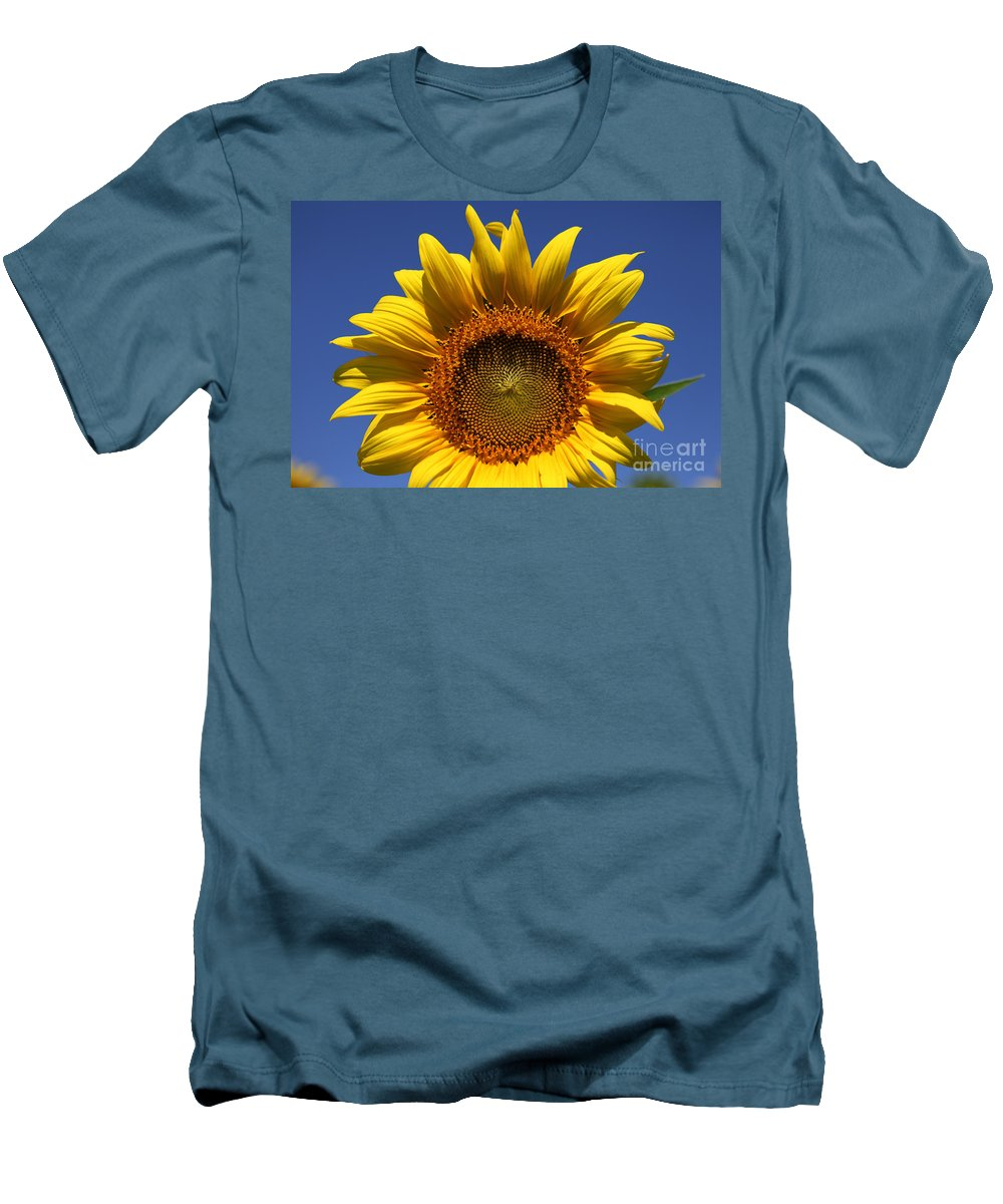 Sunflowers Men's T-Shirt (Athletic Fit) featuring the photograph Peek A Boo by Amanda Barcon