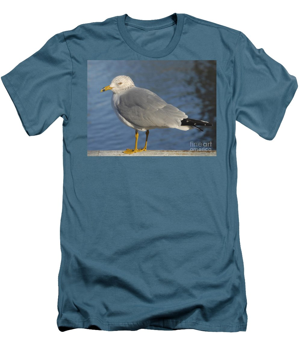 Seagull Men's T-Shirt (Athletic Fit) featuring the photograph Seagull by David Lee Thompson