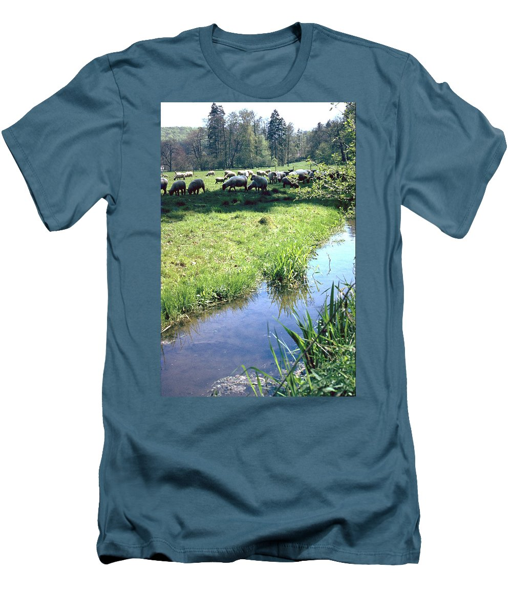 Sheep Men's T-Shirt (Athletic Fit) featuring the photograph Sheep by Flavia Westerwelle