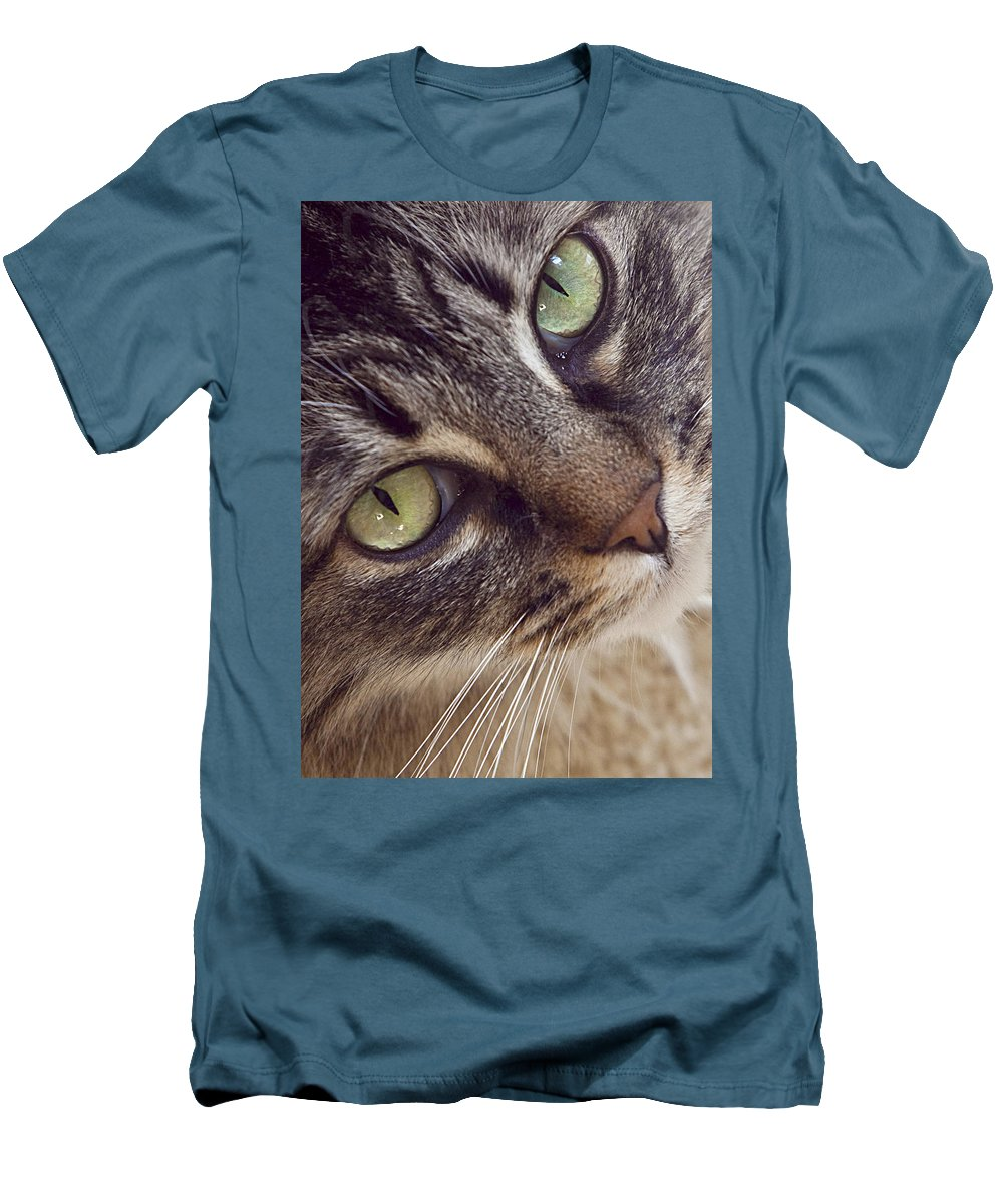 Cat Men's T-Shirt (Athletic Fit) featuring the photograph The Look Of Love by Lynn Andrews