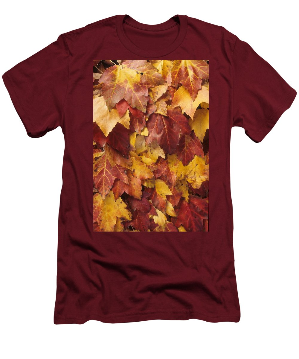 Fall Men's T-Shirt (Athletic Fit) featuring the photograph Final Fall In File by Laurie Paci