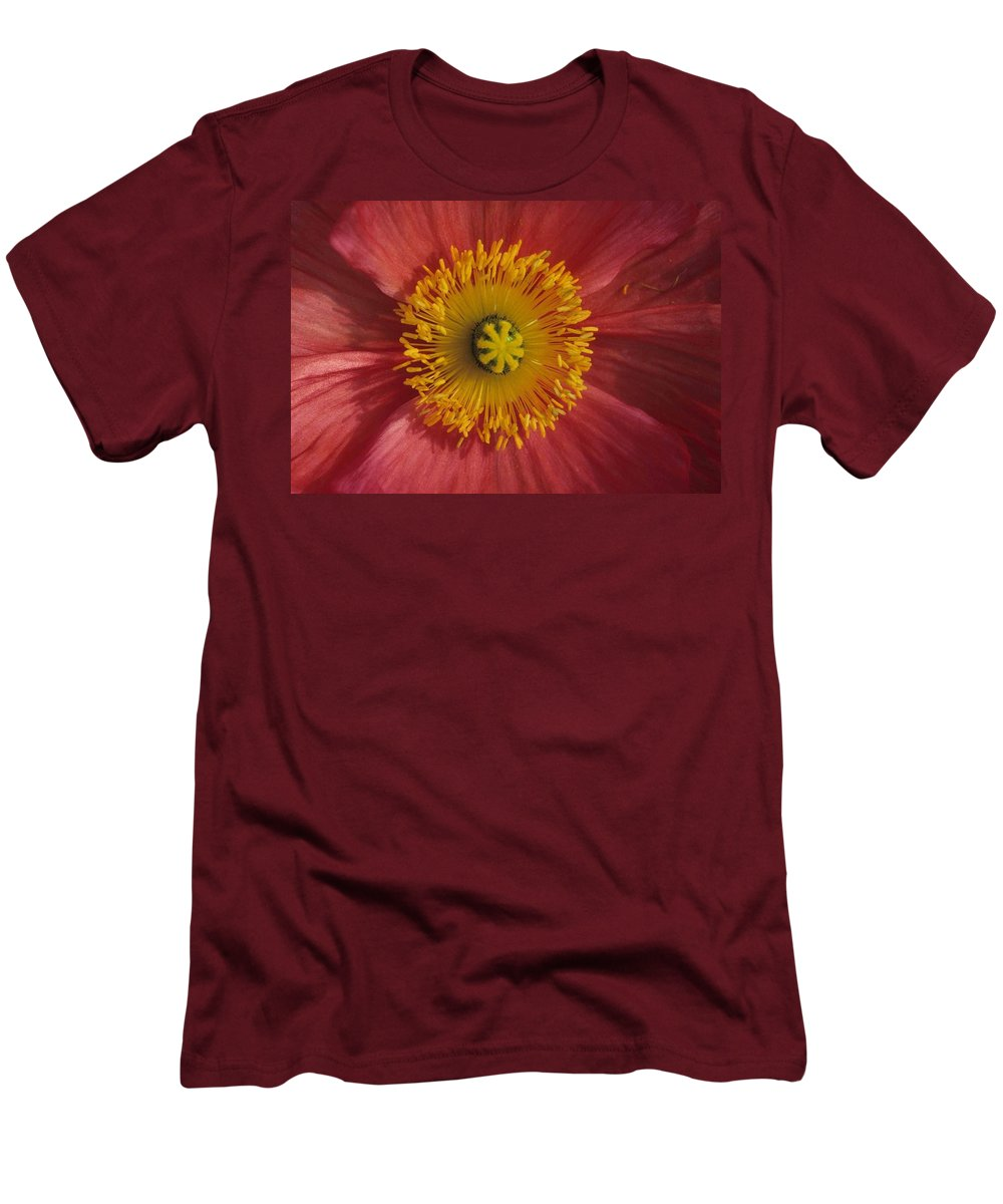 Gerber Daisy Men's T-Shirt (Athletic Fit) featuring the photograph Gerber Greetings by Laurie Paci