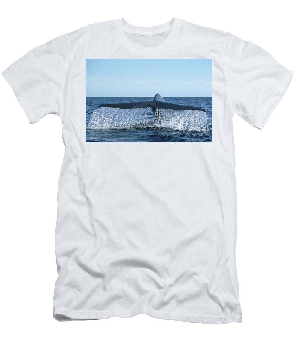 Feb0514 Men's T-Shirt (Athletic Fit) featuring the photograph Blue Whale Tail Sea Of Cortez by Mark Jones