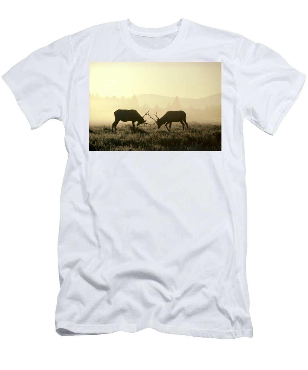 Feb0514 Men's T-Shirt (Athletic Fit) featuring the photograph Elks Sparring Yellowstone Np Wyoming by Michael Quinton