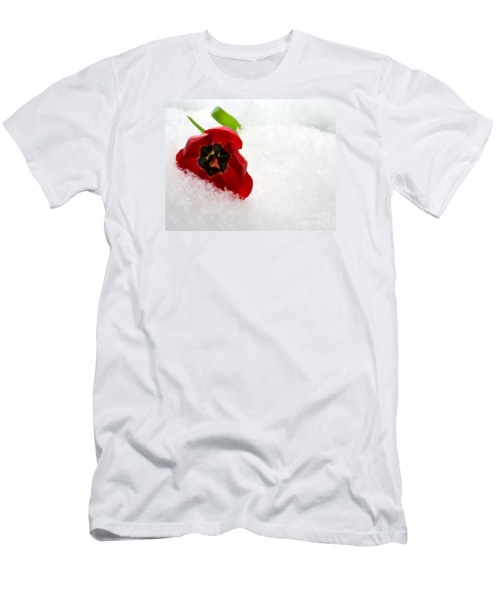 Tulip Photo Men's T-Shirt (Athletic Fit) featuring the photograph Changing Seasons by Dyana Rzentkowski
