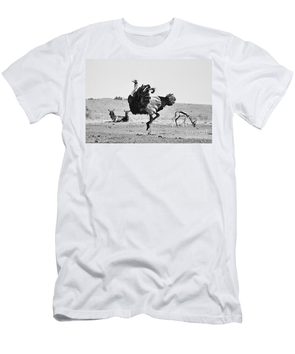 Ostrich Men's T-Shirt (Athletic Fit) featuring the photograph Show-off by Douglas Barnard