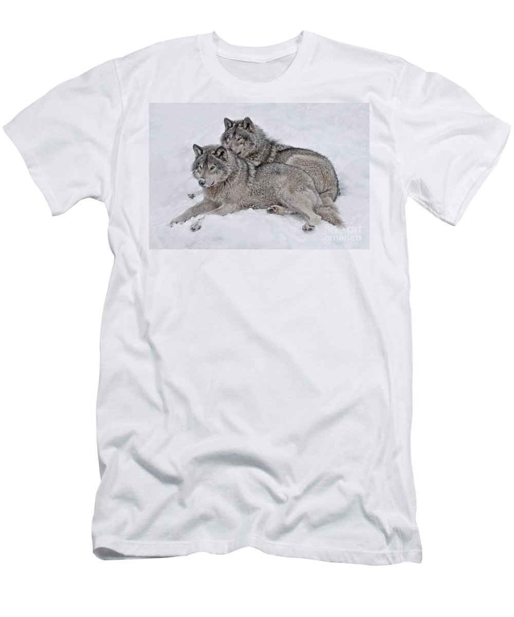 Timber Wolf Photography Men's T-Shirt (Athletic Fit) featuring the photograph Timber Wolf Pair by Wolves Only