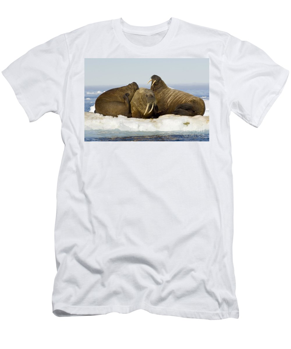 Walrus Men's T-Shirt (Athletic Fit) featuring the photograph Walruses Resting On Ice Floe by John Shaw