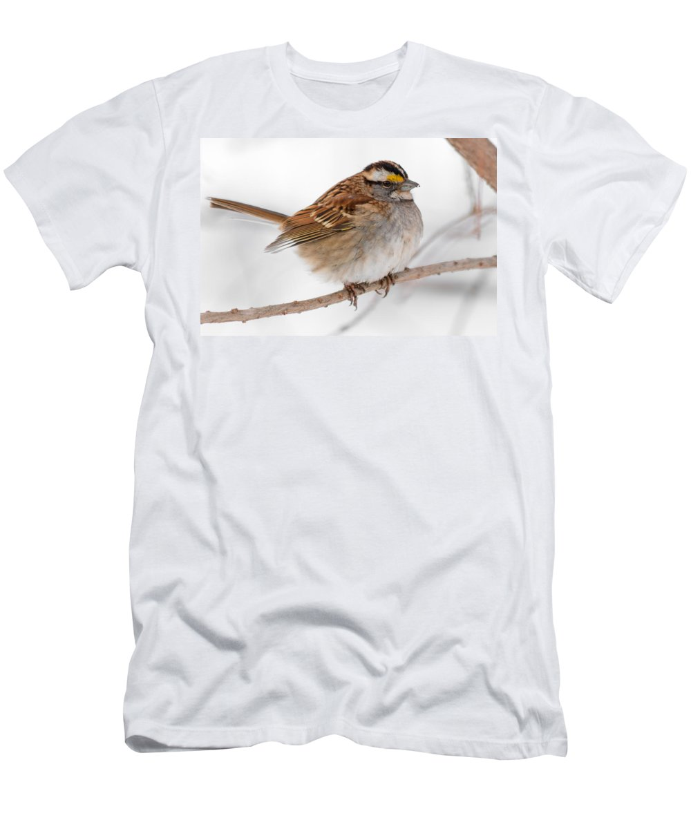 Sparrow Men's T-Shirt (Athletic Fit) featuring the photograph White-throated Sparrow by Gaurav Singh