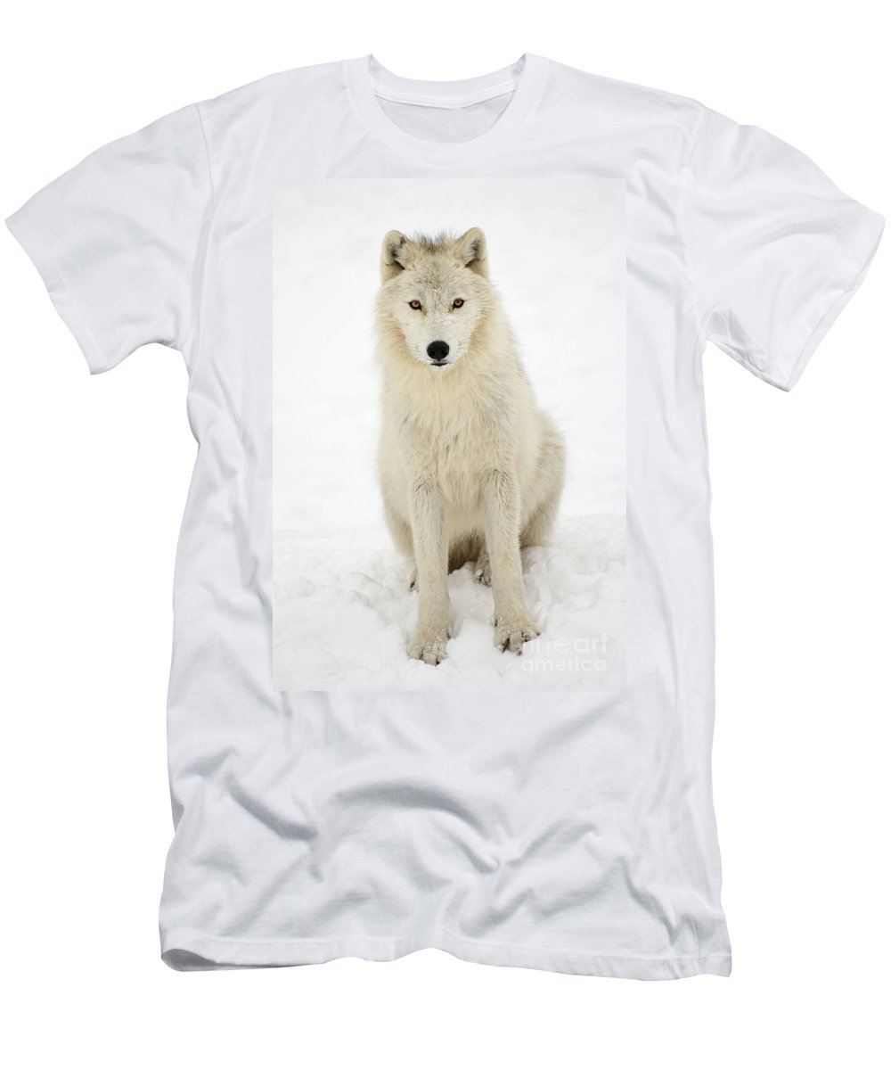 Arctic Wolf Men's T-Shirt (Athletic Fit) featuring the photograph White Wolf by Joshua McCullough