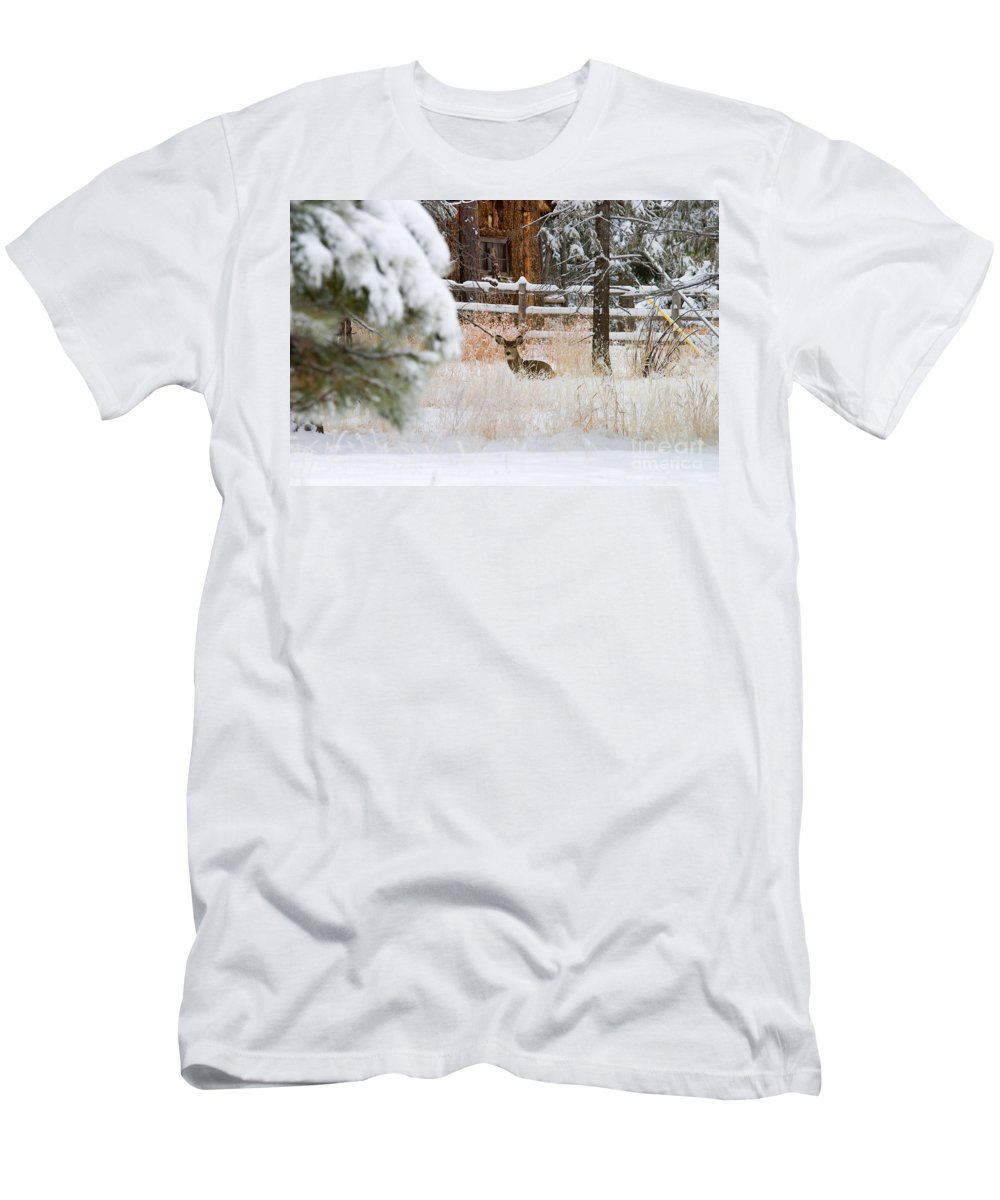 Animal Men's T-Shirt (Athletic Fit) featuring the photograph Winter Doe by Steve Krull
