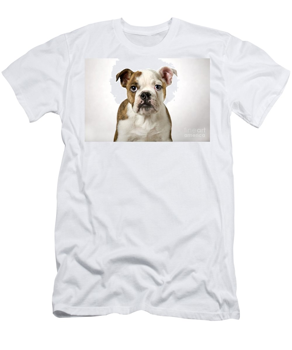 English Bulldog Men's T-Shirt (Athletic Fit) featuring the photograph 110307p153 by Arterra Picture Library