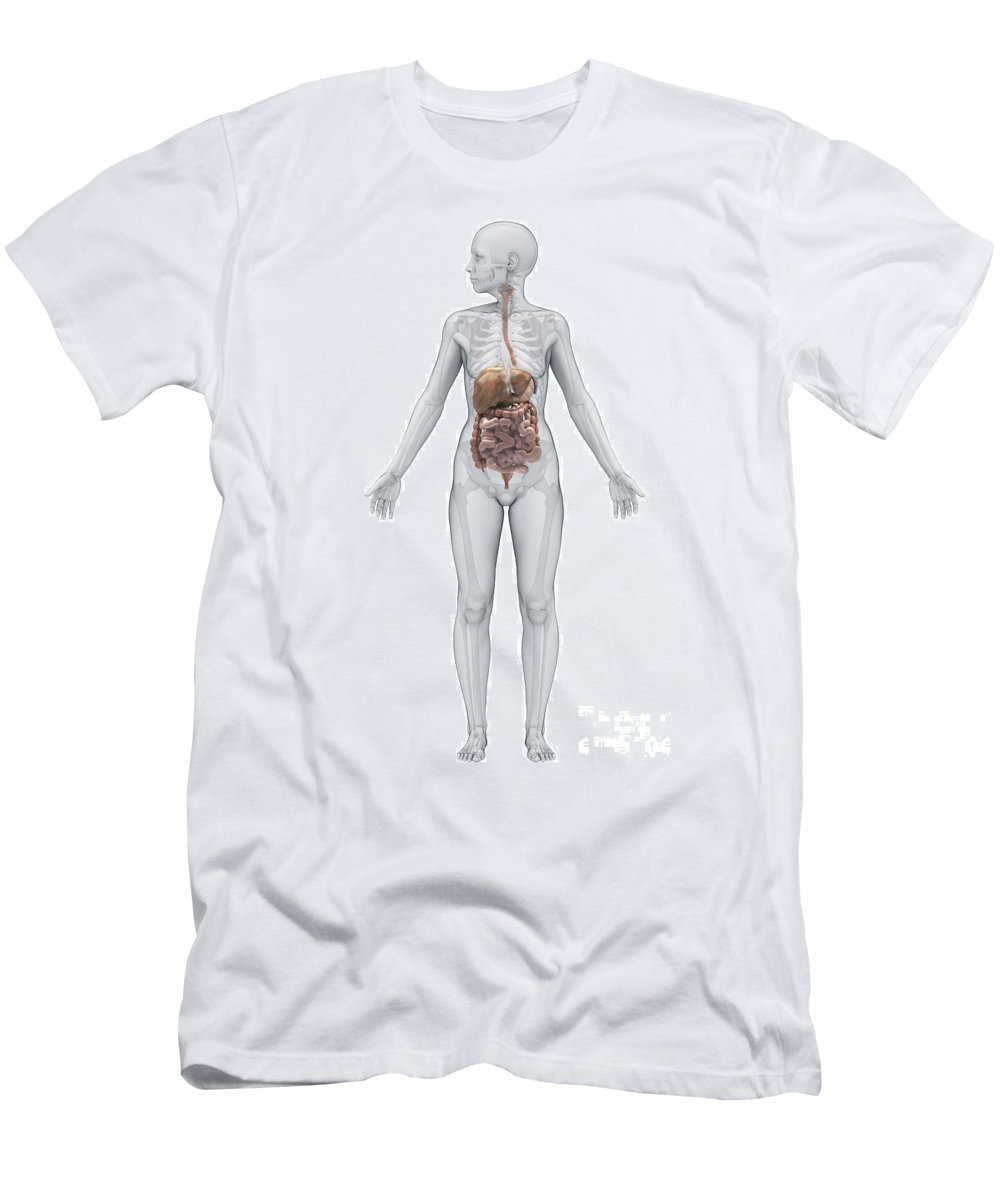Ascending Colon Men's T-Shirt (Athletic Fit) featuring the photograph Digestive System Female by Science Picture Co