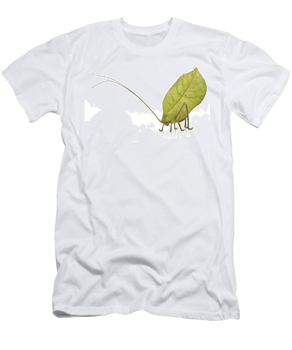 Feb0514 Men's T-Shirt (Athletic Fit) featuring the photograph Katydid Suriname by Piotr Naskrecki