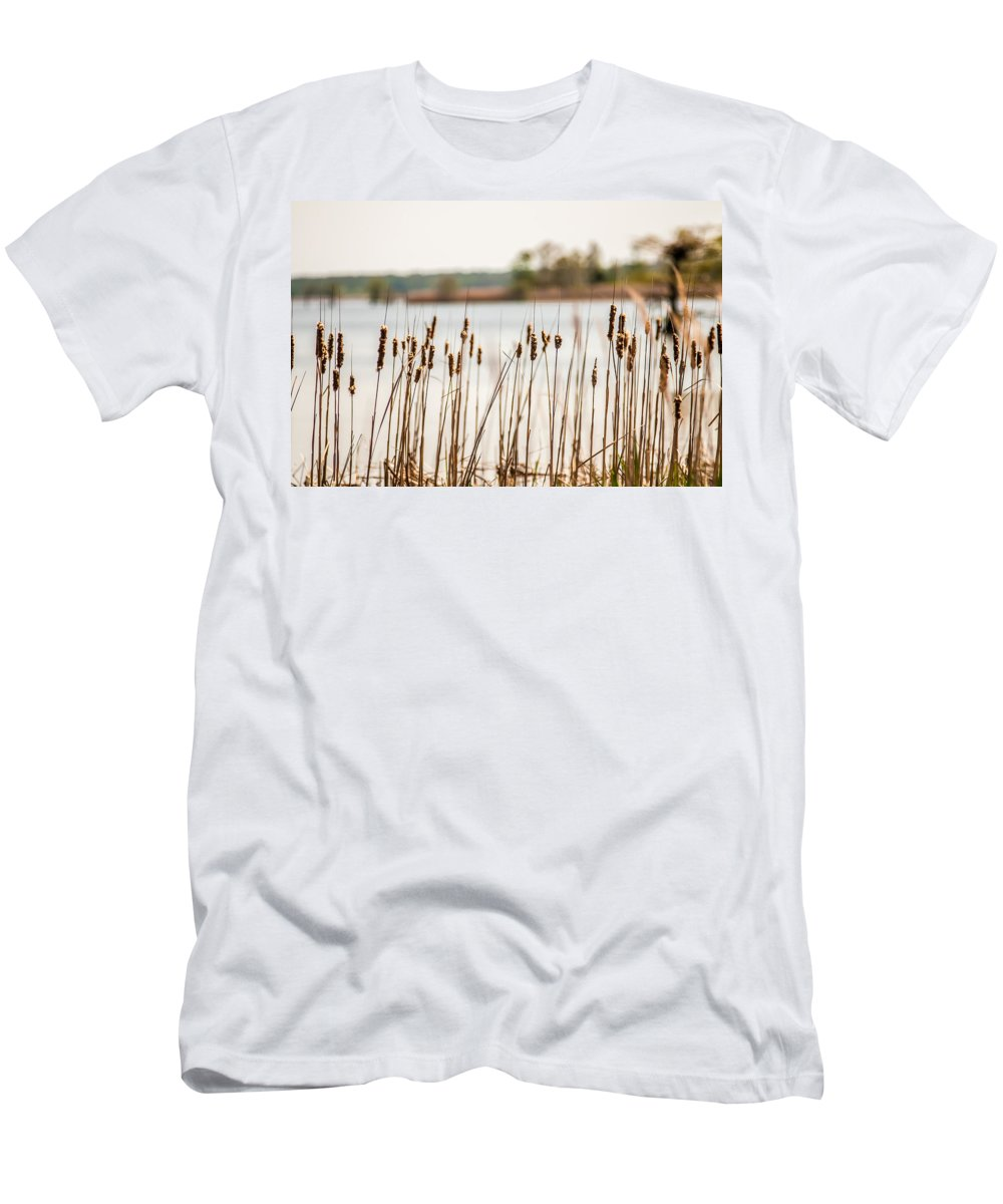 Cypress Men's T-Shirt (Athletic Fit) featuring the photograph Lake Mattamuskeet Nature Trees And Lants In Spring Time by Alex Grichenko