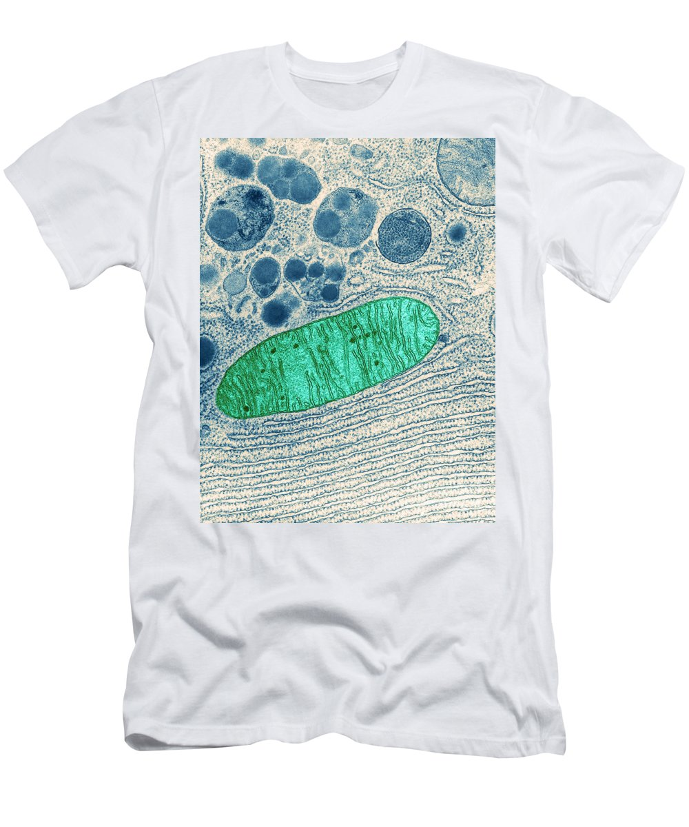 Eukaryote Men's T-Shirt (Athletic Fit) featuring the photograph Mitochondrion, Tem by Keith R Porter
