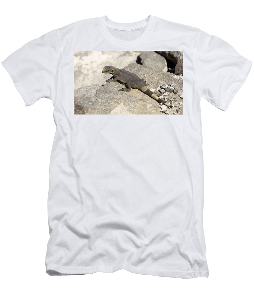 Mojave Men's T-Shirt (Athletic Fit) featuring the photograph Mojave Desert Chuckwalla by B Christopher