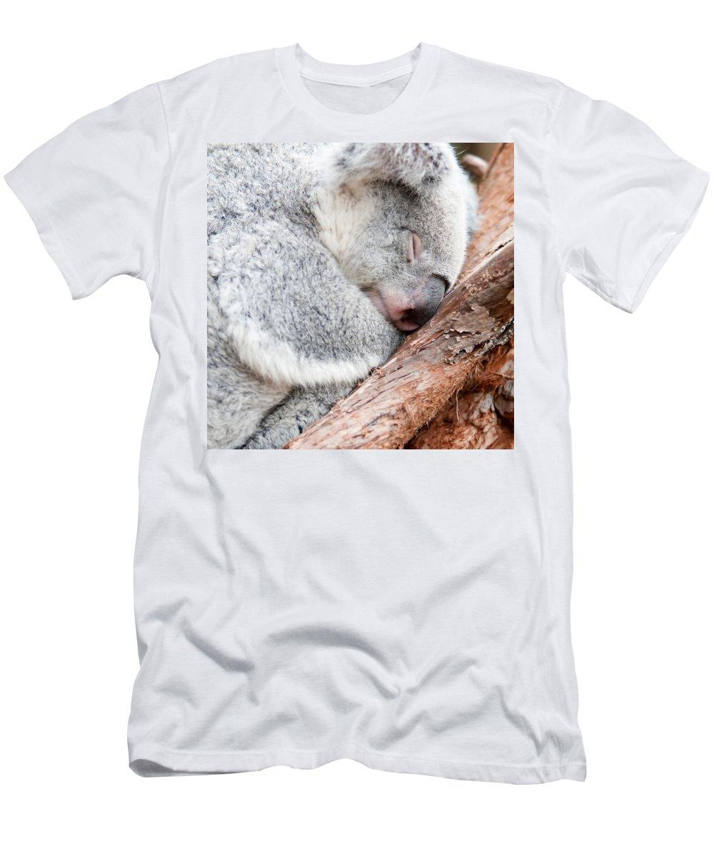 Koala Men's T-Shirt (Athletic Fit) featuring the photograph Adorable Koala Bear Taking A Nap Sleeping On A Tree by Alex Grichenko