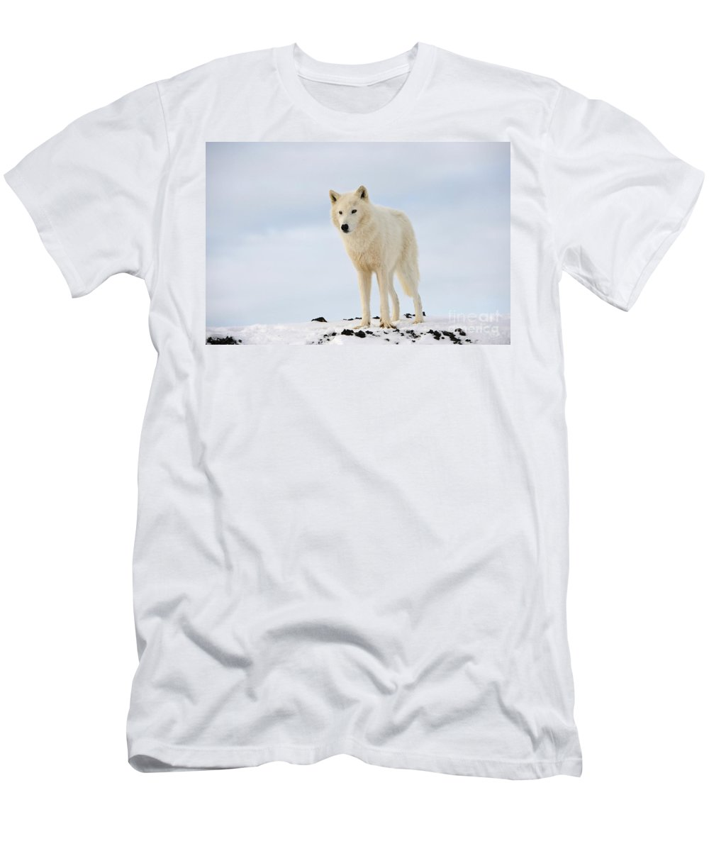 Canis Lupus Arctos Men's T-Shirt (Athletic Fit) featuring the photograph Arctic Wolf by John Shaw