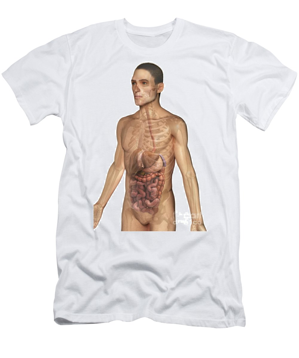 Skeleton Men's T-Shirt (Athletic Fit) featuring the photograph The Digestive System by Science Picture Co