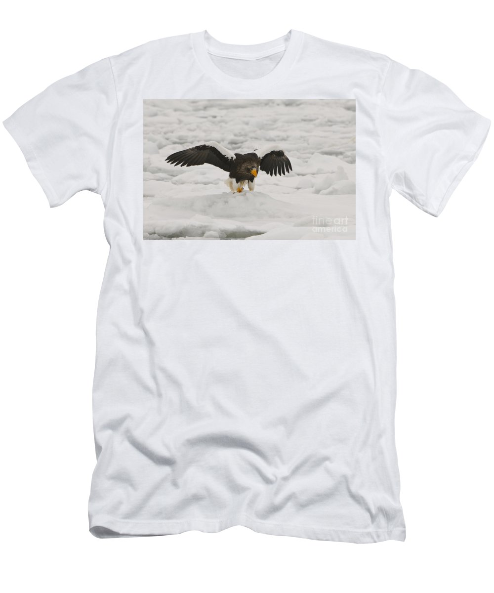 Haliaeetus Pelagicus Men's T-Shirt (Athletic Fit) featuring the photograph Stellers Sea Eagle by John Shaw