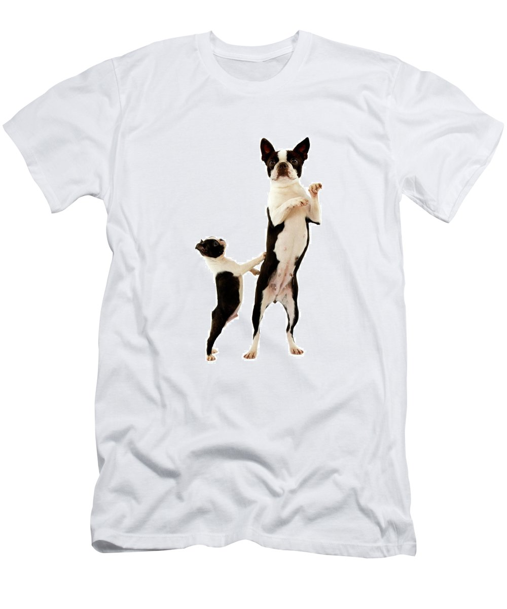 Adult Men's T-Shirt (Athletic Fit) featuring the photograph Boston Terrier by Gerard Lacz