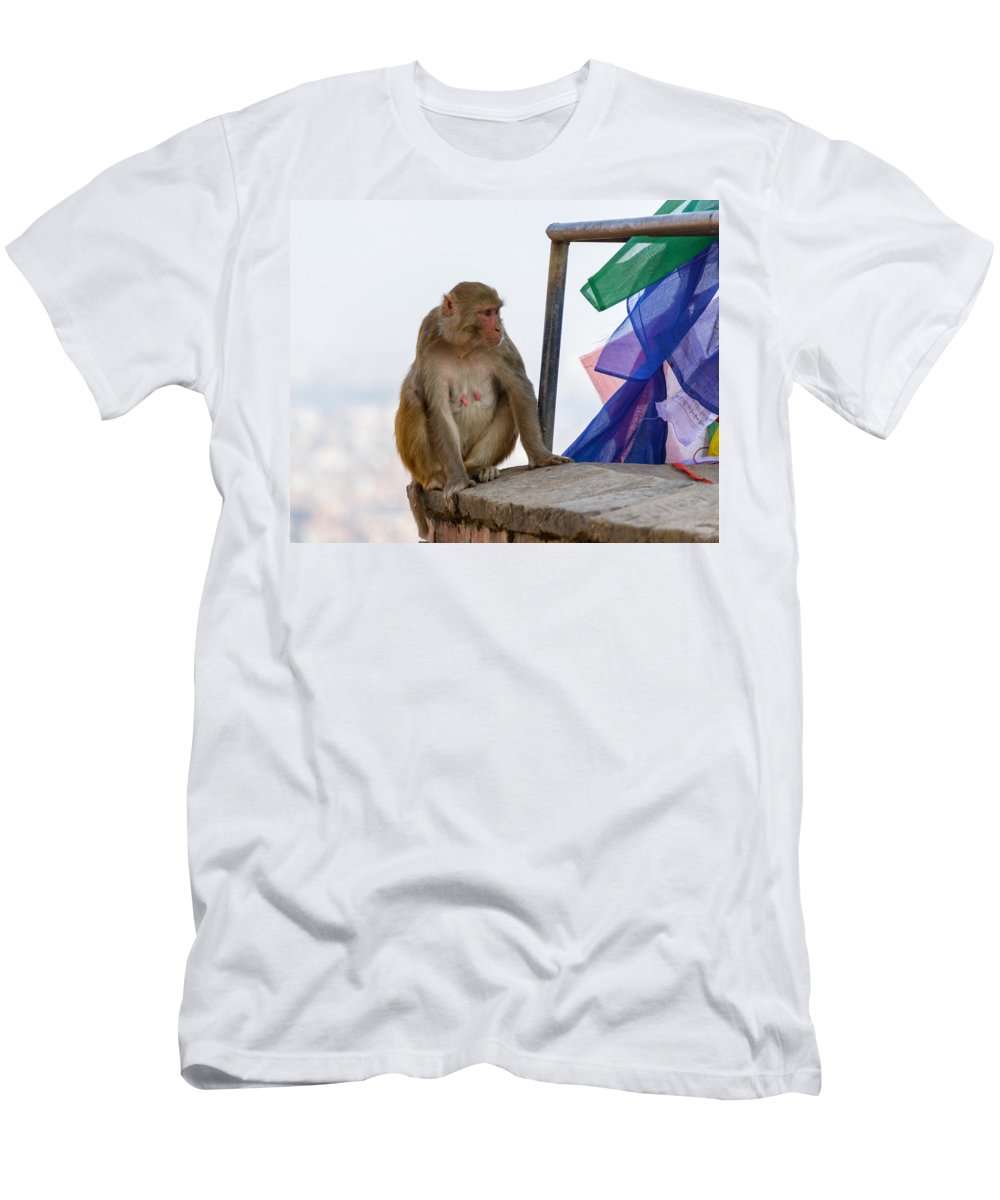Macaque Men's T-Shirt (Athletic Fit) featuring the photograph A Female Macaque On Top Of Wall by Dutourdumonde Photography